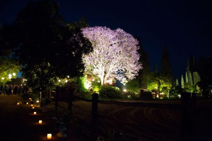 iluminación árbol y camino en boda